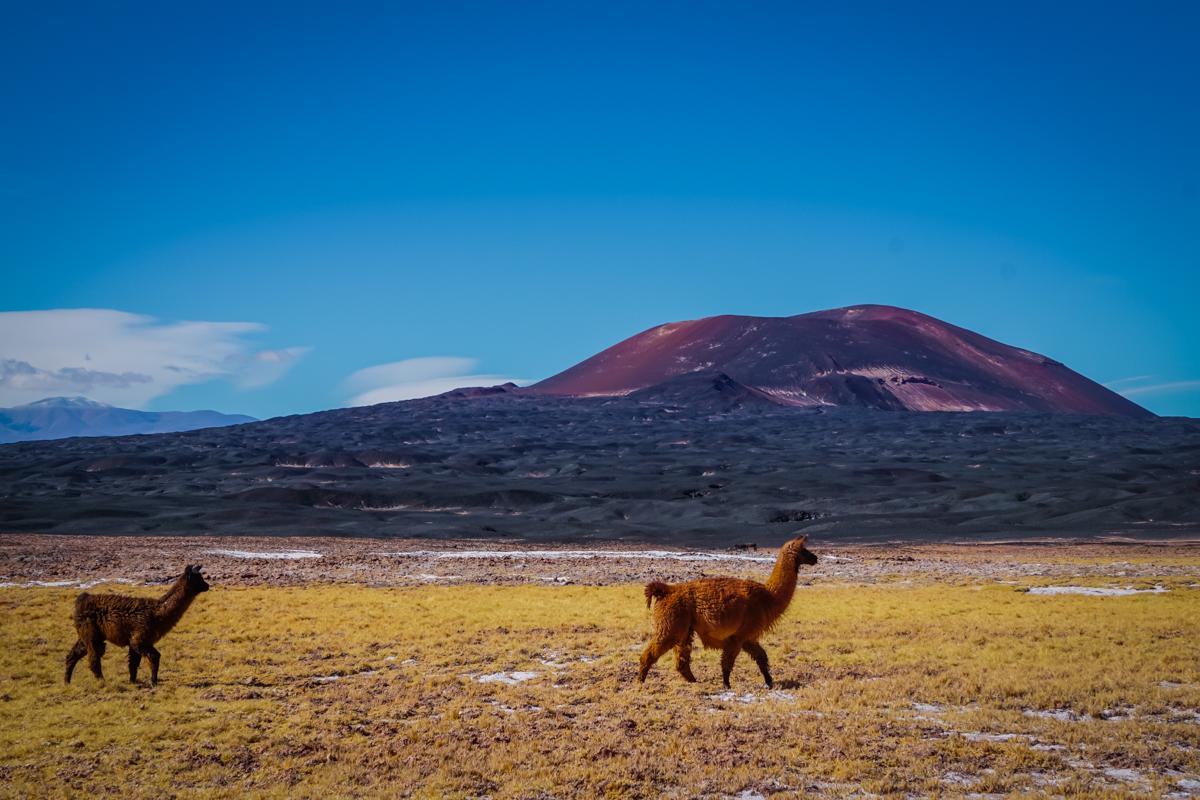 lamy, wulkan i Laguna Carachi Pampa